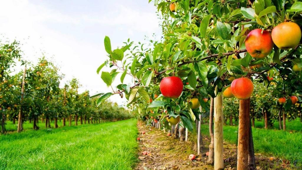 Продажа фруктового сада