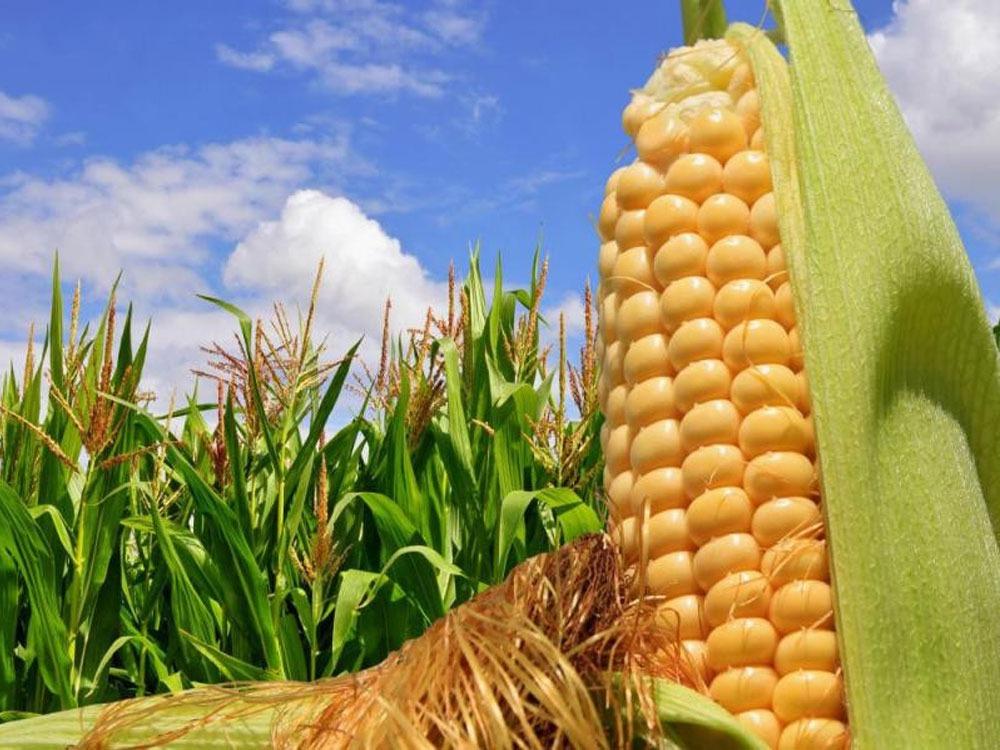 Продажа фермерского хозяйства в Краснодарском крае