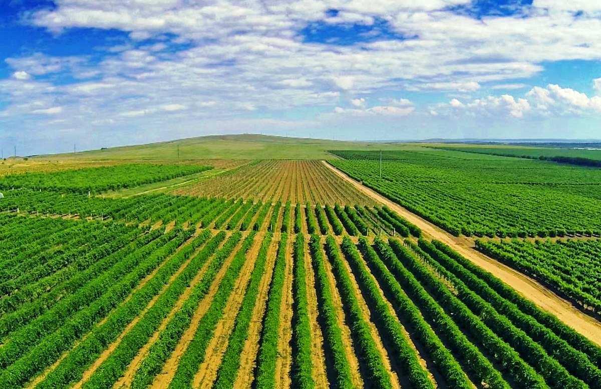 Продажа — Элитный виноградник
